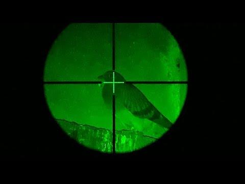 Edgun Leshiy Night Ops (видео)