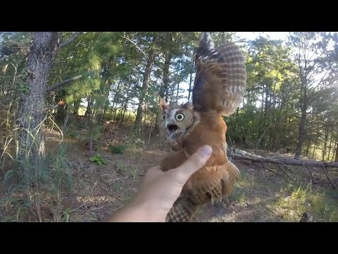 他在森林裡發現這隻貓頭鷹絕望地發出哀叫聲,看了牠的情況後立馬就伸出手做了讓貓頭鷹一輩子感激的事!