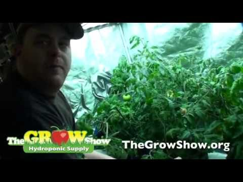 Deep Water Culture Explained – Hydroponic Supplies & Equipment for DWC
