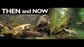 THEN and NOW- The Big Boys 220g Primitive Tank by Rachel O'Leary