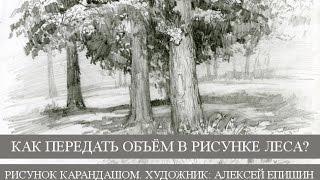 Как передать объём в рисунке леса? Рисунок карандашом