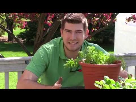 How to Grow Carrots in Containers - Complete Growing Guide
