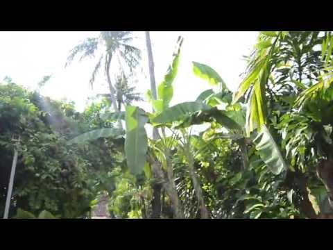 O.P. Bungalow koh Samui (hotel area)