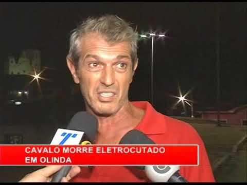[RONDA GERAL] Cavalo morre eletrocutado em Olinda