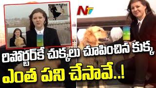 రిపోర్టర్ కే చుక్కలు చూపించిన కుక్క l Dog Steals Reporter's Microphone in Russia During live