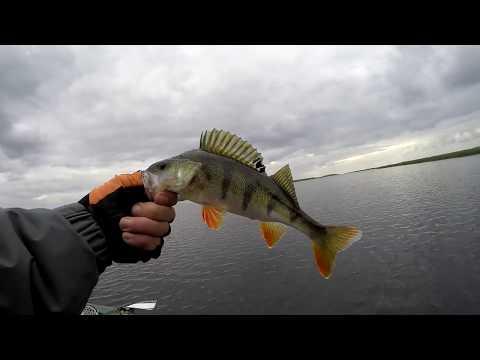 видео ловли на мелководье