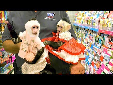 Pet Monkey Visits Store!     Shopping Spree!