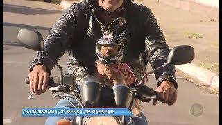 Cachorra Yorkshire de Marília vira sensação ao passear pela cidade de moto usando capacete