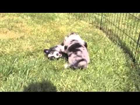 Skidmoremini.com Puppy WrestleMainia
