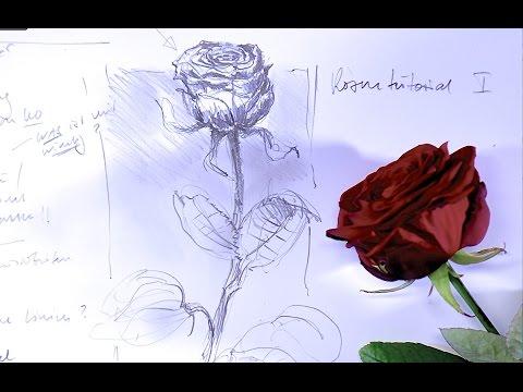 ganz einfach zeichnen lernen 9: Rose
