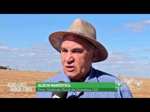 Projeto Campo Futuro faz levantamento dos custos de produção de grãos em GO
