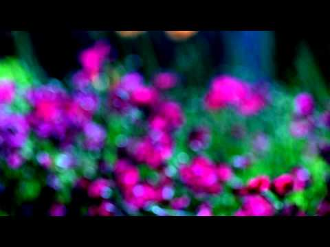 Just Flowers ^^