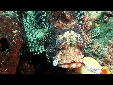 Speel Lembeh Strait - macro en critter diving af