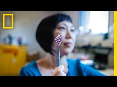 National Geographic Live! – Xiaolin Zheng: Solar Stickers to Power the World