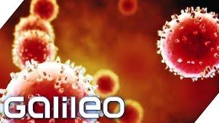 Virenfallen im Alltag