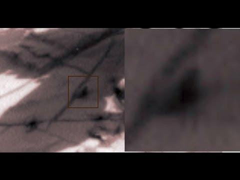 在火星的NASA無人探測器拍攝驚見「爬蟲類生物」,看了影片的證據都沒人敢說是假的!