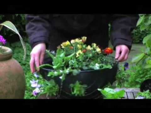How To Create a Beautiful Hanging Basket by www.millersflorist.co.uk