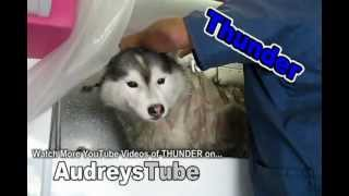 Nonton Cry Baby Husky  Bath Time Film Subtitle Indonesia Streaming Movie Download