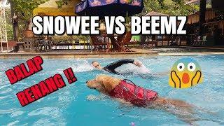 Video SNOWEE BALAP RENANG VS BEEMZ !! SIAPA YANG LEBIH CEPAT?? | SNOWEE THE GOLDEN MP3, 3GP, MP4, WEBM, AVI, FLV Februari 2019