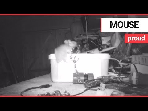 Mouse Cleans Up Garden Shed