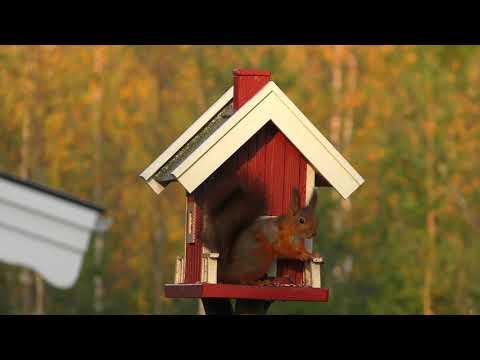 bird box video copywriting free