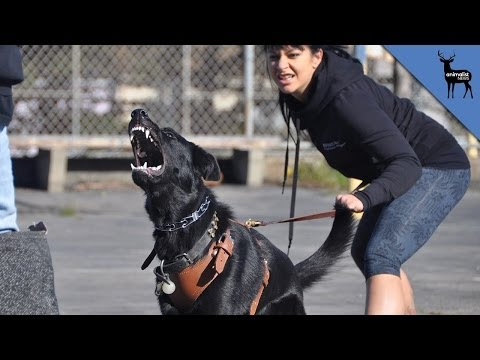 What Makes a Dog Aggressive%3F