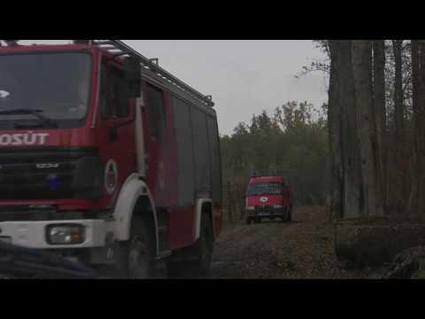 Belehalt sérüléseibe a kidőlt fa áldozata