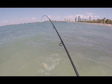Florida Road Trip 2 - Wading Biscayne Bay For Bonefish, Barracuda And More