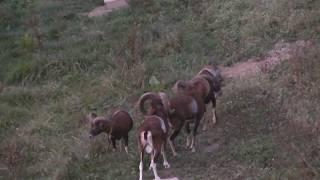 Video Jagd im Frühjahr und Sommer Part 1 MP3, 3GP, MP4, WEBM, AVI, FLV Agustus 2017