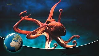 Video Primeval squids - In the hunting grounds of the mysterious Cephalopods MP3, 3GP, MP4, WEBM, AVI, FLV Juli 2018