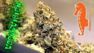 Cannabis Male makes the Ultimate Sacrafice! by VaderVision