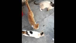 Being Chased By Cats