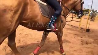 Equine Edit #7 - Heatens - Equine Edit feito com somente MEUS VIDEOS! - (leia a descrição!)