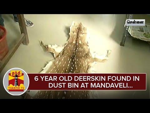 6-Year-Old-Deerskin-found-in-Dust-Bin-at-Mandaveli--Thanthi-TV