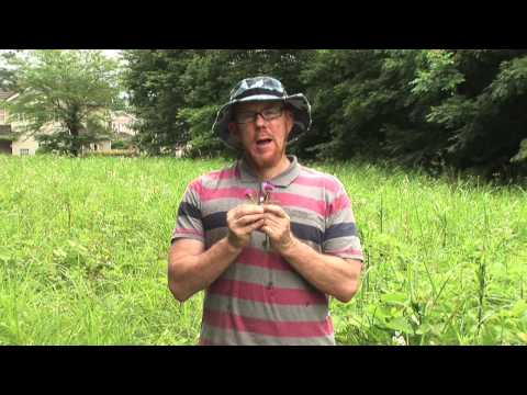 Naturalist Kevin Short on Plants, Ethnobotany & 日本の文化  Part 2