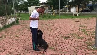 Boni Adestra - Aluna Tina Parte 1