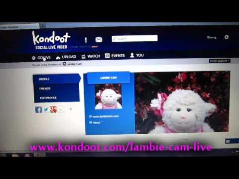 kondoot - Lambie Cam LIVE! Coming sooon! Be sure to subscribe! Otherwise, stalk me at: MY WEBSITE: http://www.LambieCam.com LAMBIE'S STORE: http://www.cafepress.com/La...
