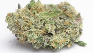 Fire Alien Black - (Strain Review) by Strain Central