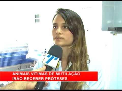 [RONDA GERAL] Animais vítimas de mutilação irão receber próteses