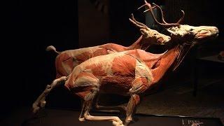 PRIMEUR Animal Inside Out in Natuurmuseum Fryslân