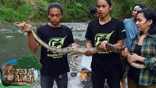 Download Video Pelepaskan Kembali Biawak dan Ular ke Alam Terbuka - Jejak Rimba (5/10) MP3 3GP MP4