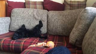Felix Having A Funny Five Minutes On The Sofa