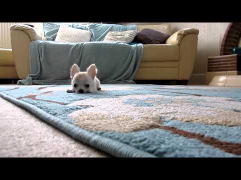 Een baby hondje