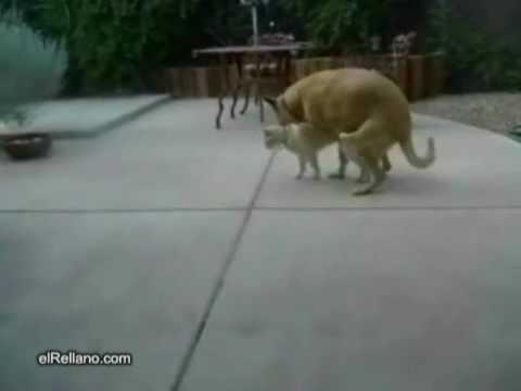 貓吃驚的表情,牠到底看到什麼?!