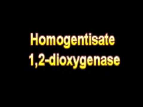 What Is The Definition Of Homogentisate 1,2 dioxygenase - Medical Dictionary Free Online Terms