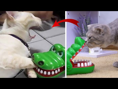 Cats Reaction | Cat Got Bitten By Alligator Toy And His Funny Reaction To Cat Toy | Woa Mew