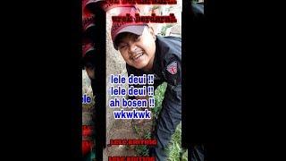 pertempuran berdarah lele kriting vs belut babon !!