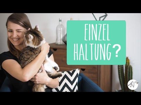 Katzen: Katze alleine halten - artgerecht? Einzelha ...