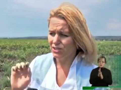 Россельхознадзор выявил очаги произрастания горчака ползучего в Ростовской области
