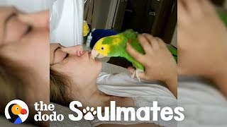 Loyal Parrot Is His Mom's Lifetime Companion | The Dodo Soulmates by The Dodo